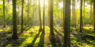 Aby uratować planetę wystarczy wielki las