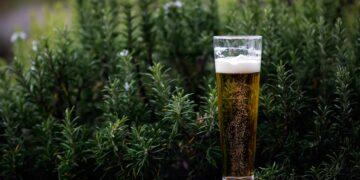 Ile wynosi mandat za spożywanie alkoholu w miejscu publicznym?